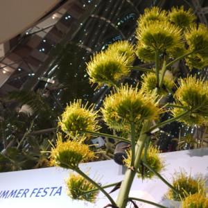 ims_summer_festa